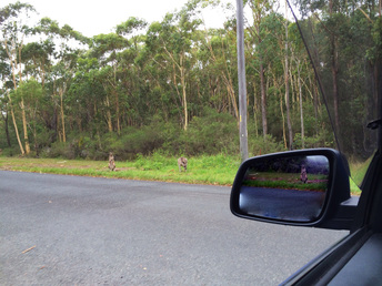 Driving lesson in Nowra